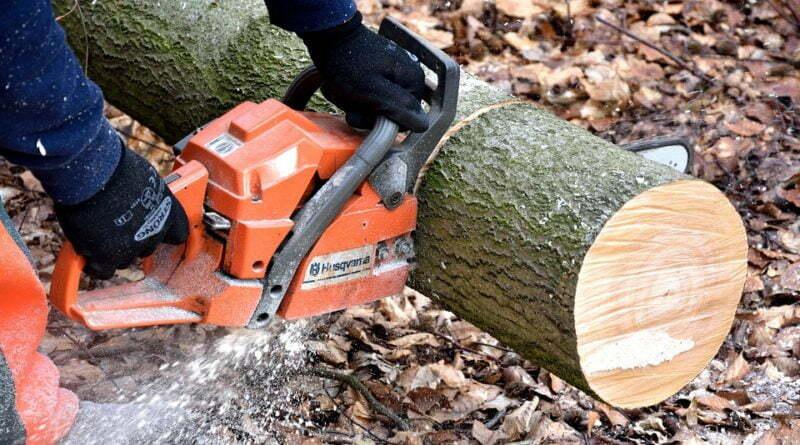 drujba in copaci, hoti de lemne