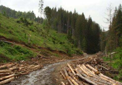 """Măcelul pădurilor din Parcul Naţional Domogled Valea Cernei, subiect în serialul """"Broken"""""""