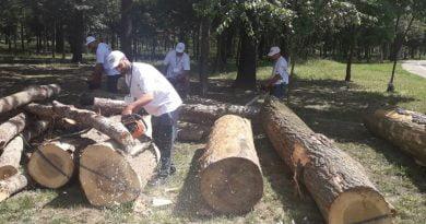 cu drujba in lemne